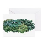 Hosta Clumps Greeting Cards (Pk of 10)
