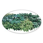 Hosta Clumps Oval Sticker
