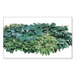 Hosta Clumps Rectangle Sticker