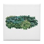 Hosta Clumps Tile Coaster