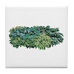 Hosta Clumps Tile Coaster