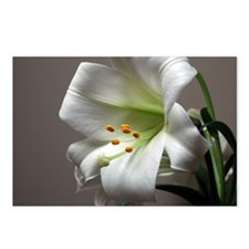 Funny Easter lily Postcards (Package of 8)