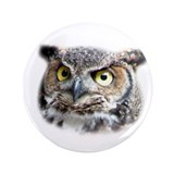 "Great Horned Owl Face 3.5"" Button"