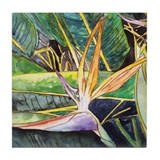 Bird of Paradise Flower Tile Coaster