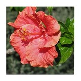 Hibiscus up close Tile Coaster
