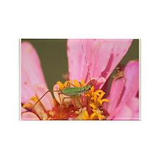 Katydid in Flower Rectangle Magnet
