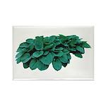 Blue Hosta Rectangle Magnet (100 pack)
