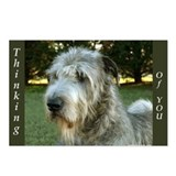 8 Irish Wolfhound Postcards Thinking of U