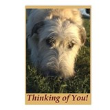 8 Irish Wolfhound Thinking of U Postcards Lacy