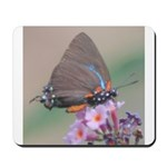 Great Purple Hairstreak Mousepad