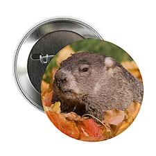 """Groundhog 2.25"""" Button"""