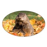 Groundhog Oval Decal