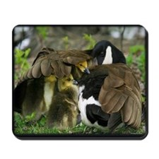Canada Goose with Goslings Mousepad