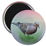 Mourning Dove Magnet