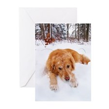 Sleepy Snow Golden Greeting Cards (Pk of 20)