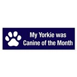 Yorkie of the Month Bumper Bumper Sticker