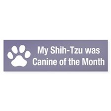 Shih-Tzu of the Month Bumper Bumper Sticker