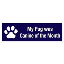 Pug of the Month Bumper Bumper Sticker