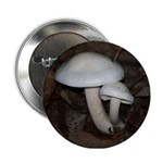 White Mushrooms 2.25