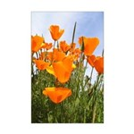 Tall Poppies Mini Poster Print