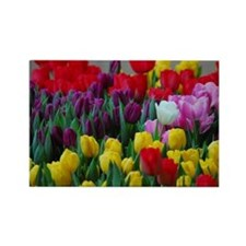 White Tulip Rectangle Magnet