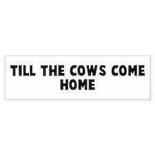 Till the cows come home Bumper Bumper Sticker
