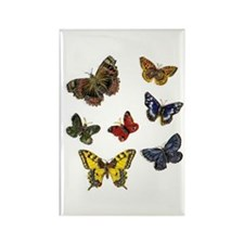 Butterfly 9 Rectangle Magnet (100 pack)