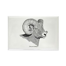 Bighorn Sheep Rectangle Magnet