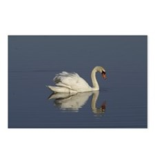 Swan Postcards (Package of 8)