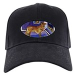 Nova Scotia Duck-Tolling Retriever Black Cap