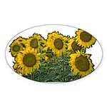 Sunflowers Oval Sticker
