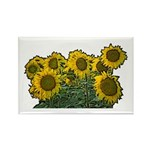 Sunflowers Rectangle Magnet (100 pack)