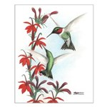 Ruby-throated Hummingbirds Small Poster