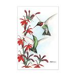 Ruby-throated Hummingbirds Mini Poster Print