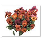 Red Pansies Small Poster