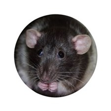 "Silly Rat 3.5"" Button"