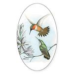Rufous Hummingbirds Oval Sticker