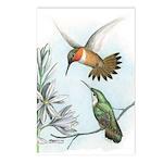 Rufous Hummingbirds Postcards (Package of 8)