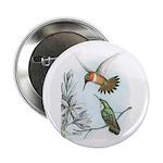 Rufous Hummingbirds 2.25