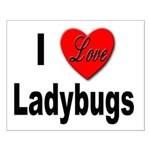 I Love Ladybugs for Insect Lovers Small Poster