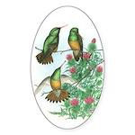 Buff-bellied Hummingbirds Oval Sticker