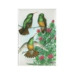 Buff-bellied Hummingbirds Rectangle Magnet (100 pa