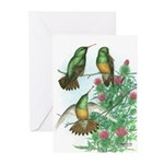 Buff-bellied Hummingbirds Greeting Cards (Pk of 10