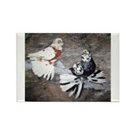 Champion Trumpeter Pigeons Rectangle Magnet (100 p