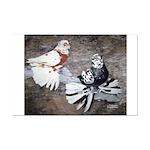 Champion Trumpeter Pigeons Mini Poster Print