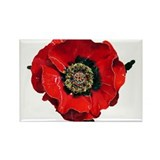 Poppy Rectangle Magnet (10 pack)
