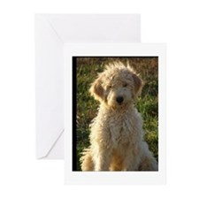 Cute Golden doodles Greeting Cards (Pk of 20)
