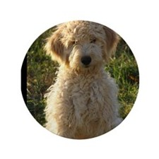 "Unique Golden doodles 3.5"" Button"