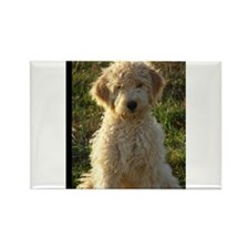 Unique Golden doodles Rectangle Magnet (100 pack)