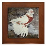 Pageant Champion Pigeon Framed Tile